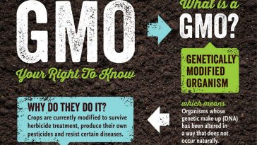 What is a GMO3