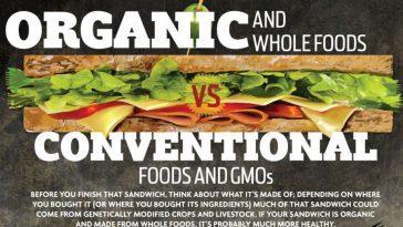 organic food infographic